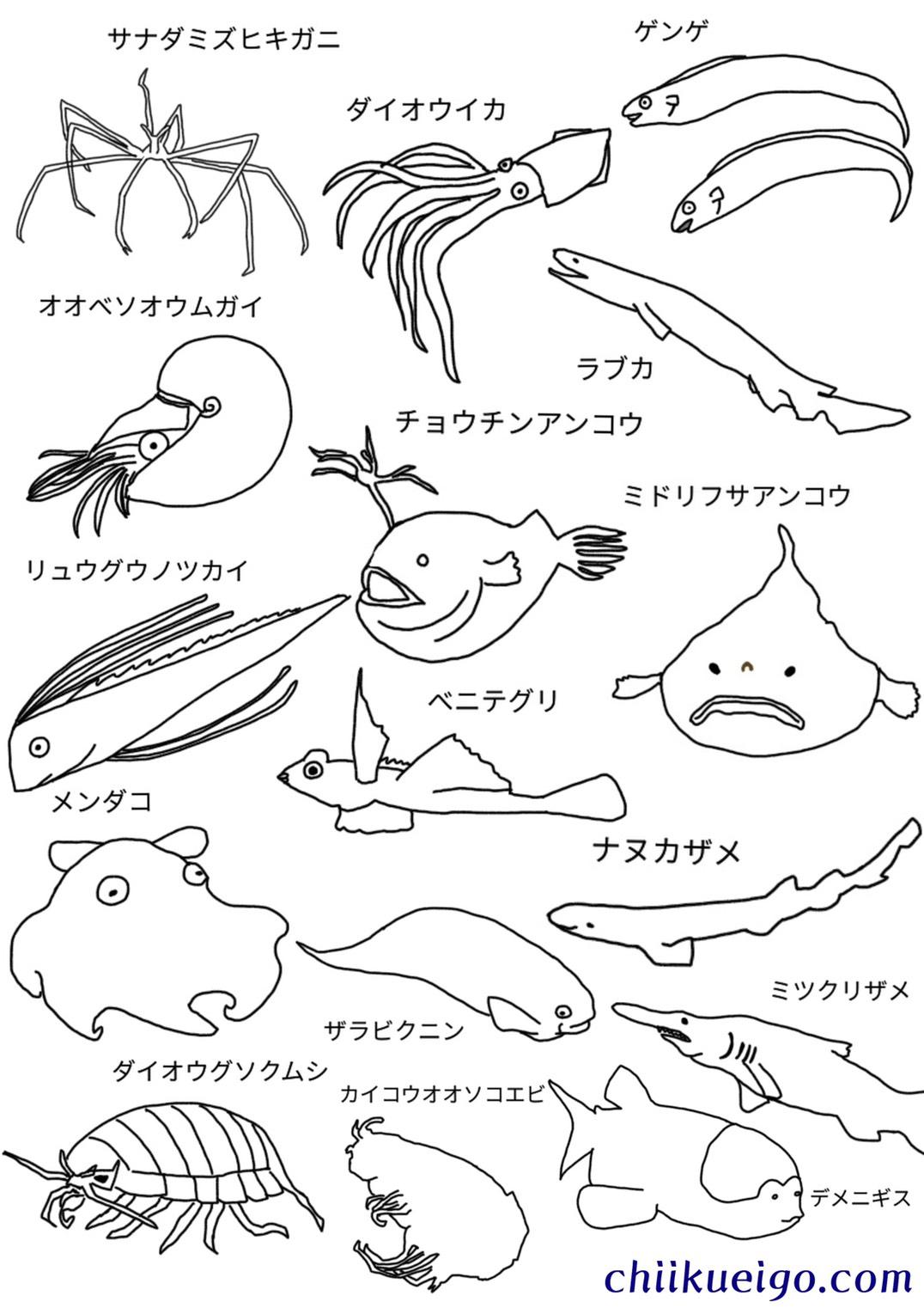 深海生物塗り絵1